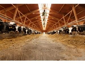 山东省正强养牛场取暖照明-畜牧取暖保温灯案例