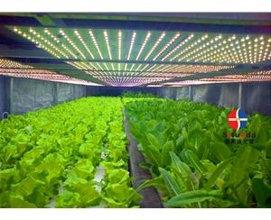 大棚蔬菜生长补光灯