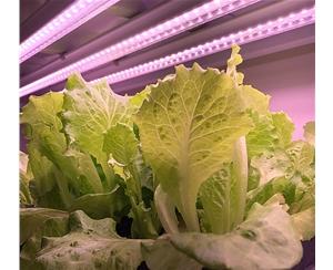 大棚水果蔬菜用的植物生长灯