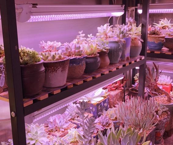 花卉专用植物生长灯