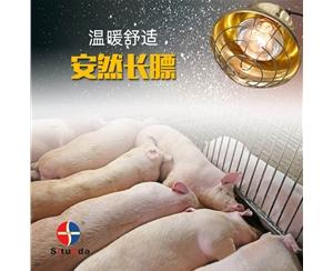 100W畜牧养殖保温灯